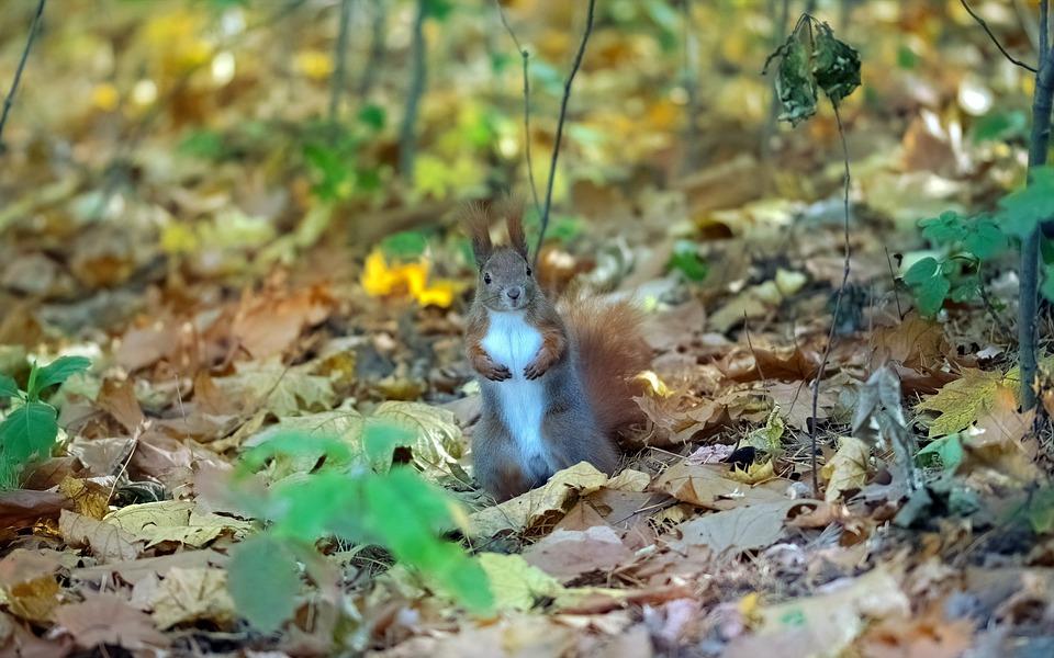 Squirrel, Pet, Rodent, Fur, The Bath Tight-knit