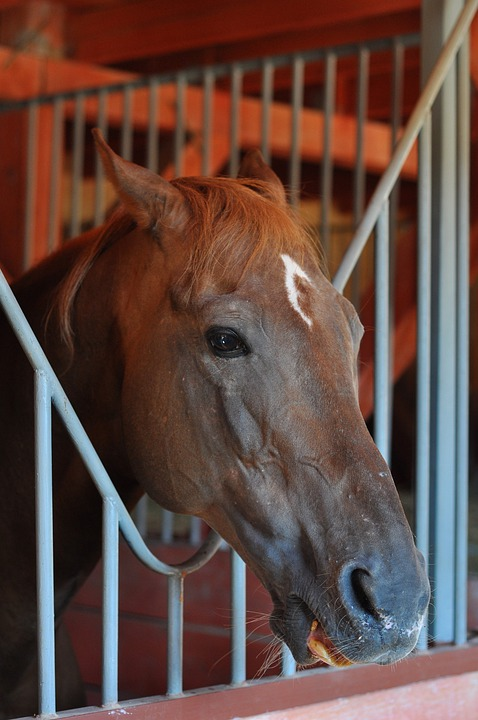 Horse, Stable, Head, Wild Horse, Animal, Riding