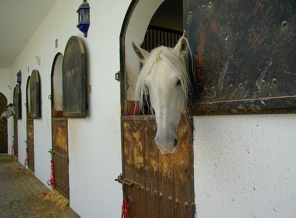 Horses, Haras, Stable, Pure Blood, Equestrian