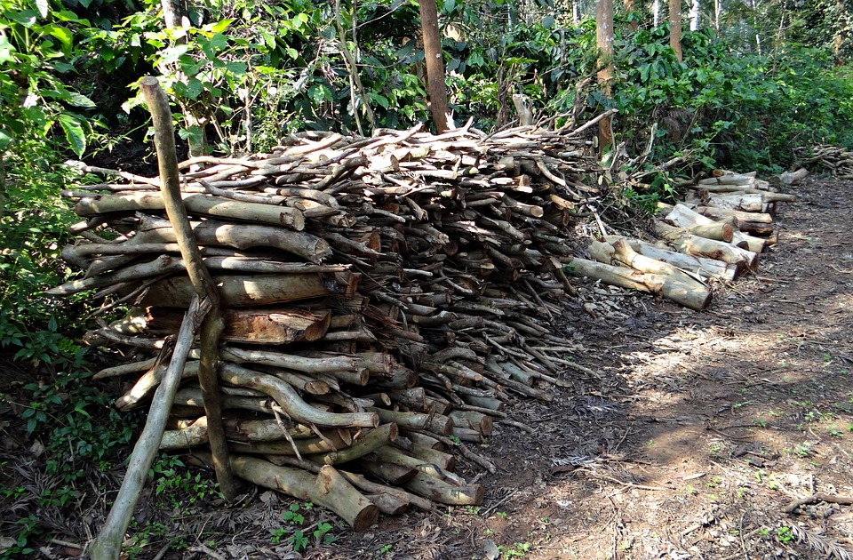 Firewood, Fuel, Stack, Forest, Kodagu, India