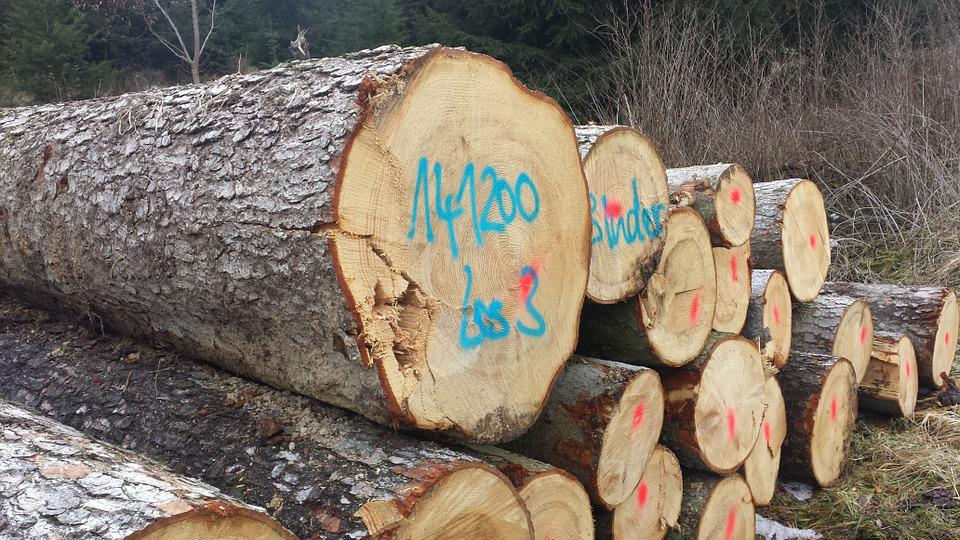 Cut The Logs, Stacked, Forestry Work, Sawed Off