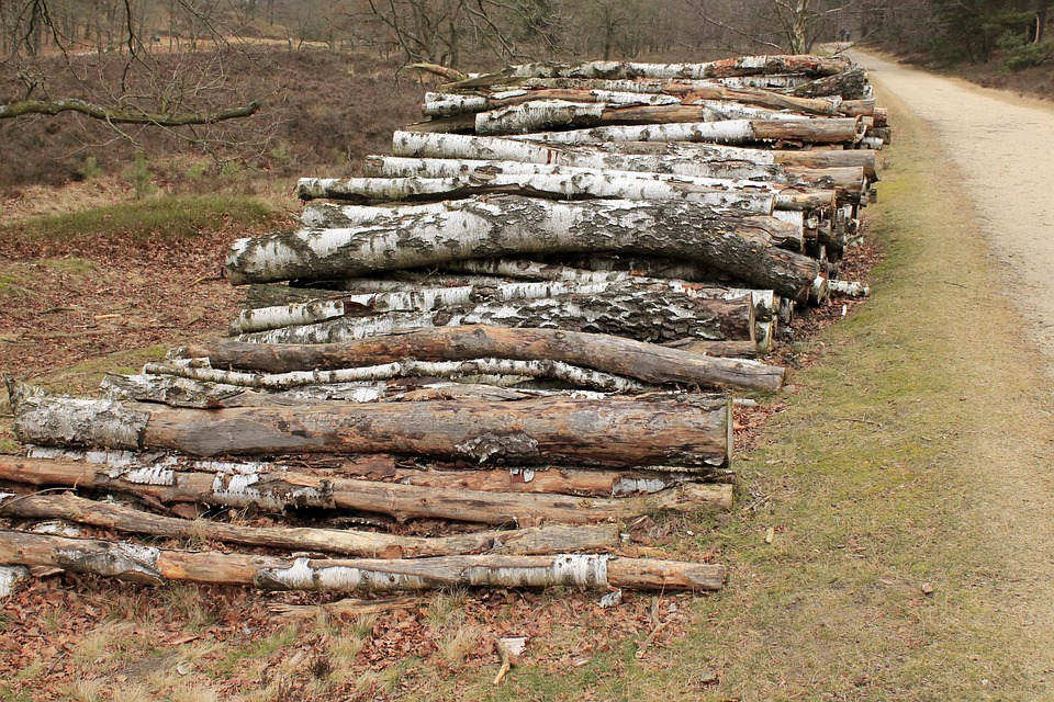 Cut The Logs, Stacked, Birch, Forestry Work, Sawed Off
