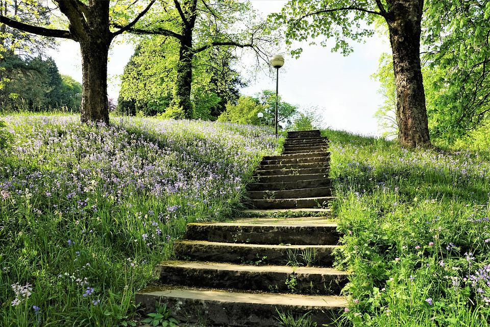 Stairs, Park, Garden, Baden Baden, Meadow, Nature