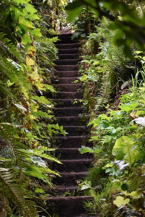 Stairs, Stairway, Path, Outdoors, Nature
