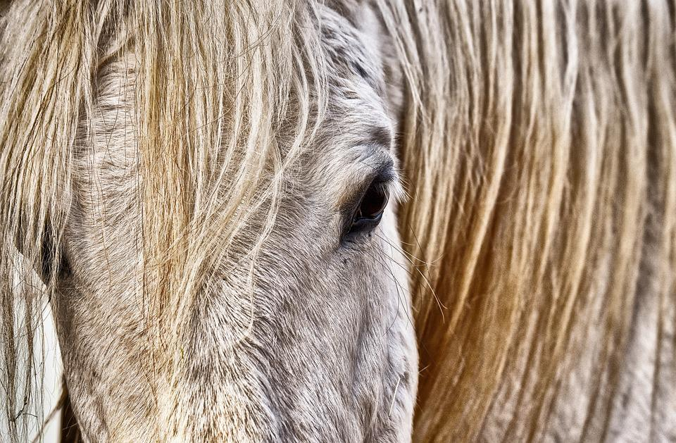 Mold, Horse, White, Animal, Nature, Stall, Reiterhof
