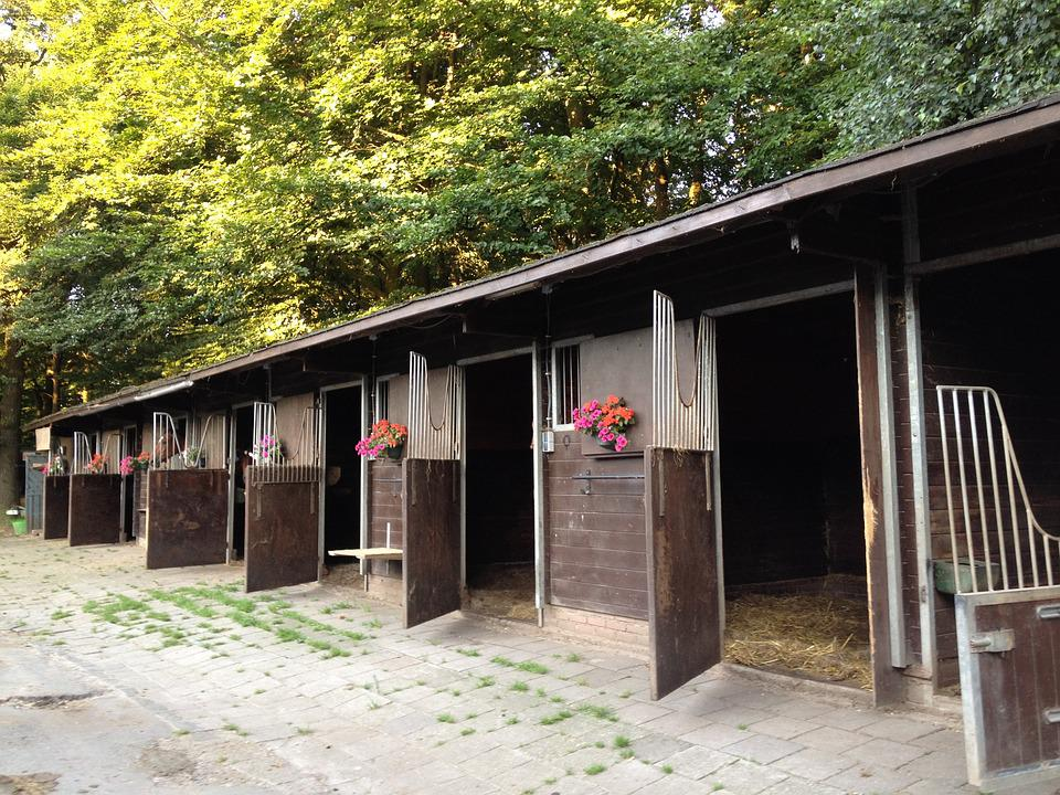 Stalls, Horses, Freedom