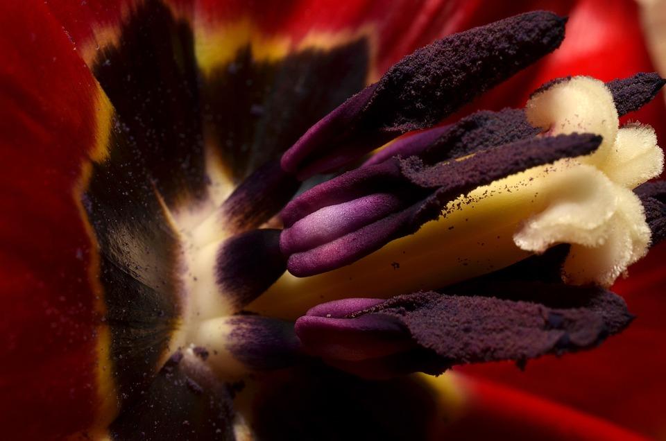 Stamens, Macro, Nature
