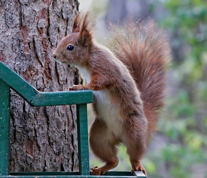 The Squirrel, Rodent, Standing, The Feeder, Curious
