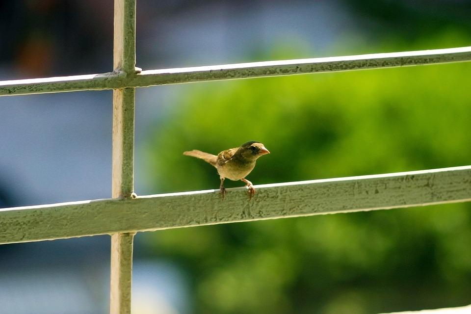 Little Bird, Curious, Standing, Guardrail, Veranda