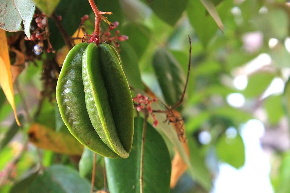 Star Fruit, Plant, Food