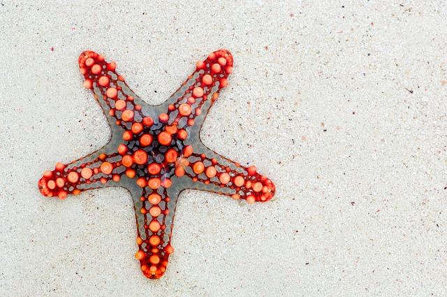 Starfish, Sea, Red, Animal, Beach, Travel, Star, Summer