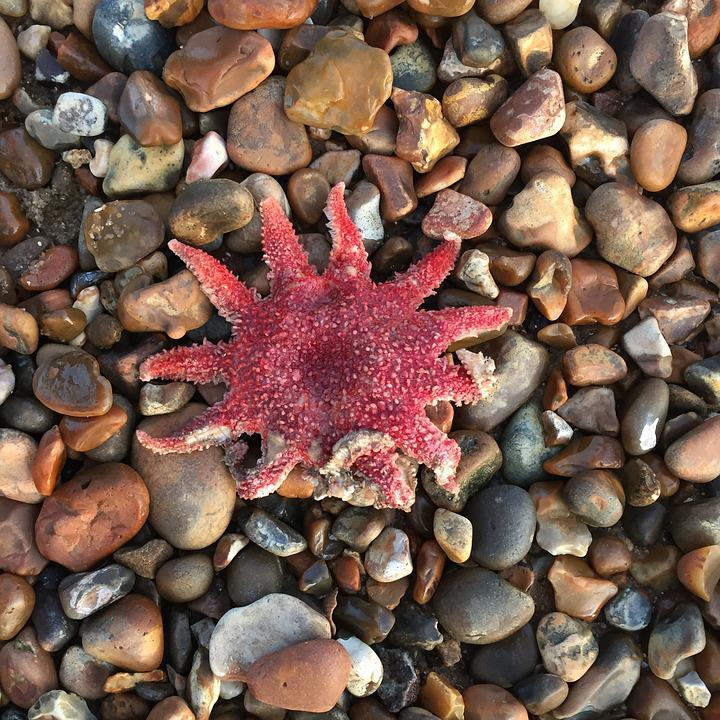 Starfish, Pebbles, Sea