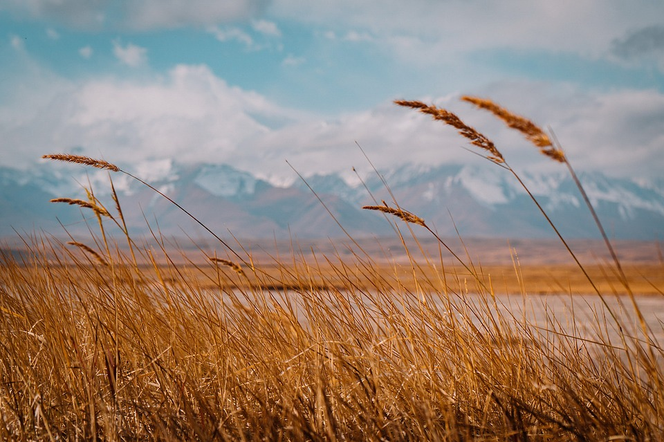 Landscape, Stem, Weed, Field