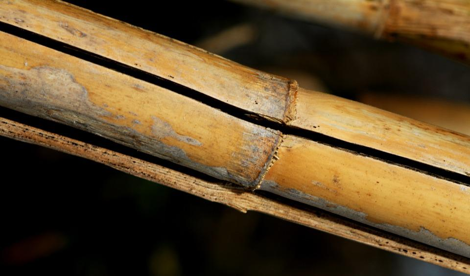 Cane, Nature, Stems Cylindrical, Plants