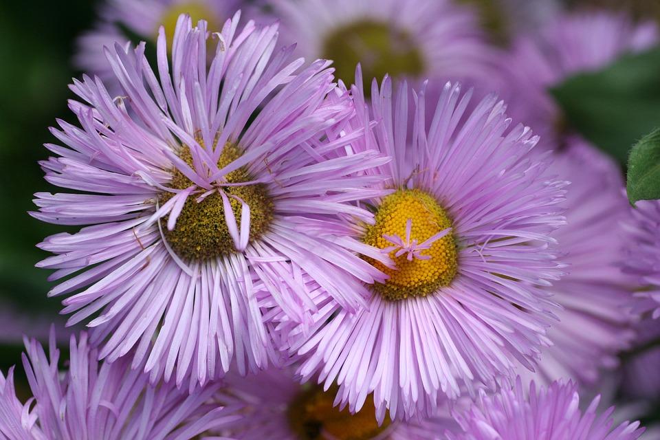 Flowers, Stems, Leaves, Garden, Summer, Flowering