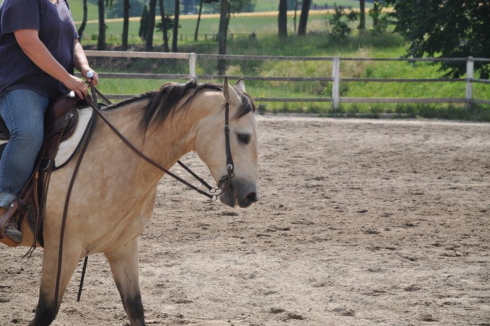 Horse, Step, Trot, Dun, Brown, Beautiful, Western