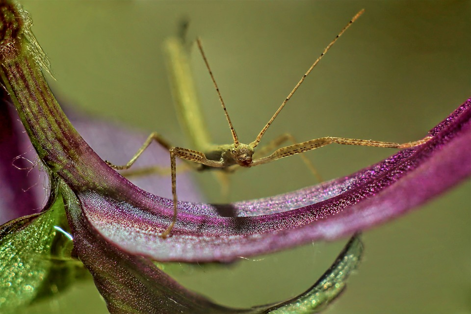 Stick Insect, Leaf, Macro