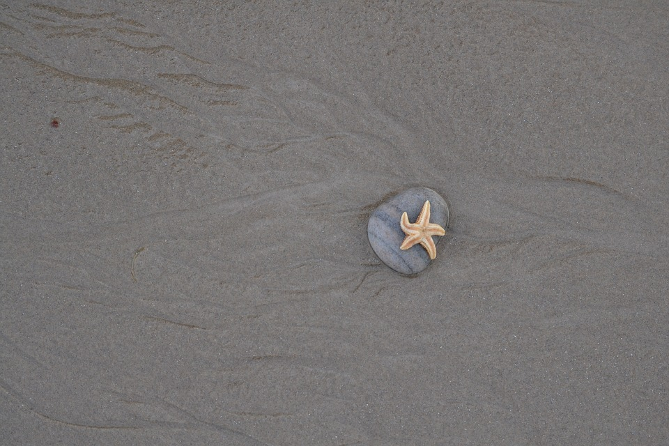 Starfish, Beach, Stone, Still Life, Sea, Sand
