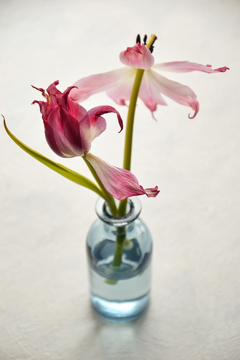 Flowers, Tulips, Plant, Still Life, Fade, Withered