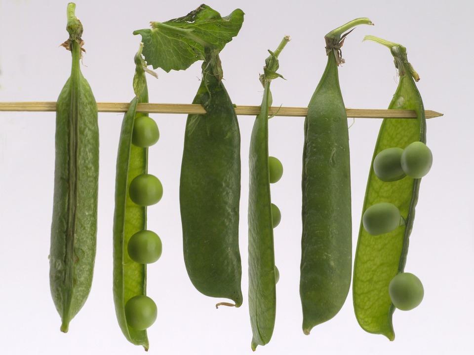 Vegetables, Peas, Macro, Shelling Peas, Still Life, Pod