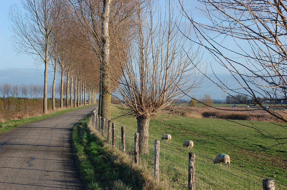 Trees, Road, Pasture, Sheep, Still Life, Photography