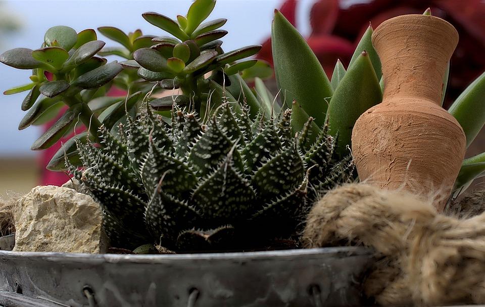 Succulent, Shell, Planting, Mix, Still Life