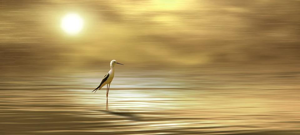 Bird, Animal, Stilt, Gold, Golden, Digital Art, Digital