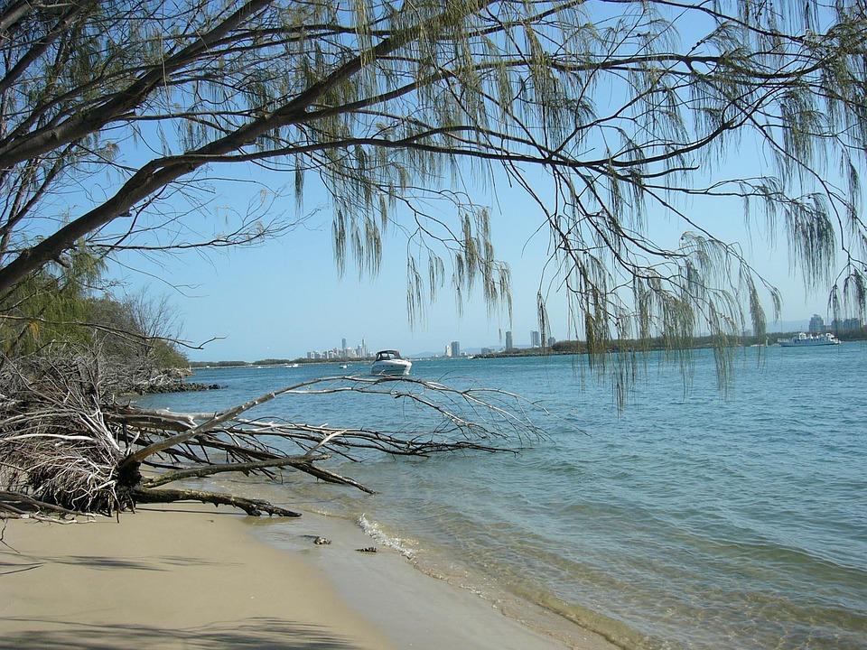 Sea, Beach Resort, Ocean, Sand, Trees, Uprooted, Stimps