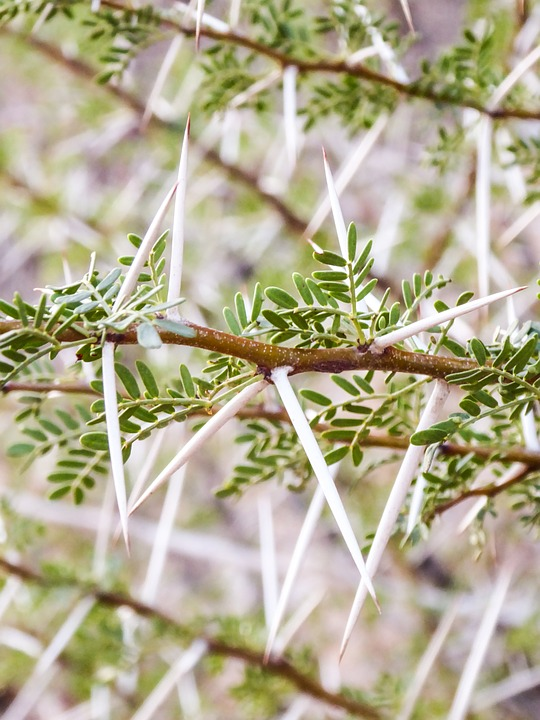 Plant, Exotic, Thorns, Sting, Pointed, Green, Nature