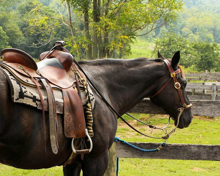 Horse, Western Saddle, Pomel, Horn, Stirrup, Cantle