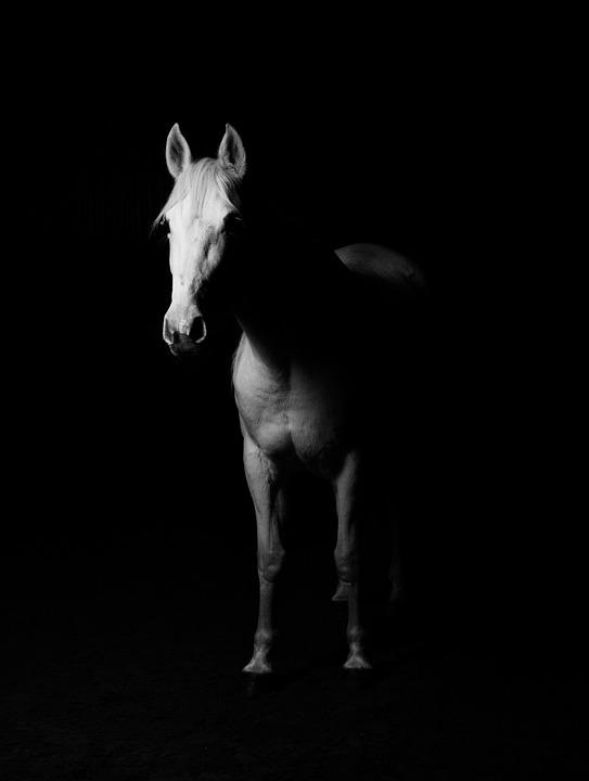 White, Horse, White Horse, Black Background, Sto, Ride