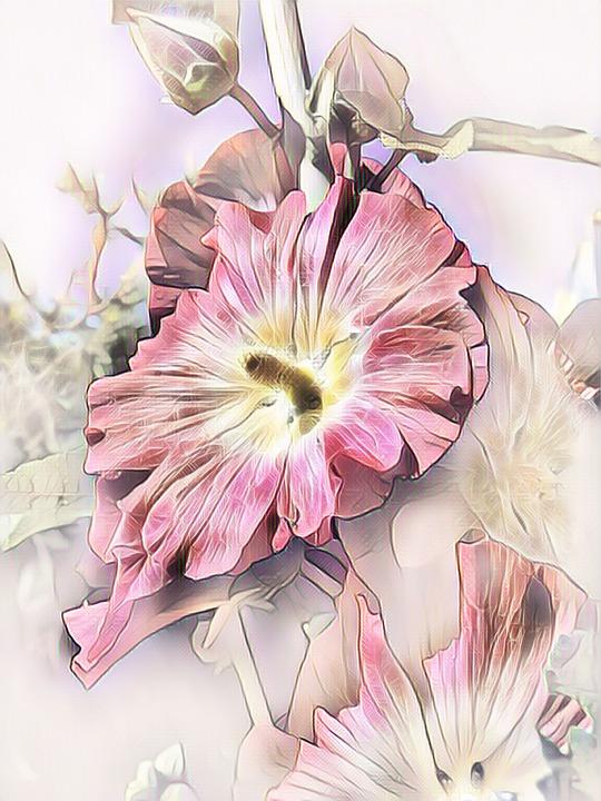 Stock Rose, Photo Art, Digital Painting, Nature, Pink