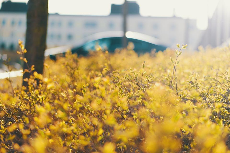 Solar, Bush, Green, Stockholm, Garden, Summer, Leaf