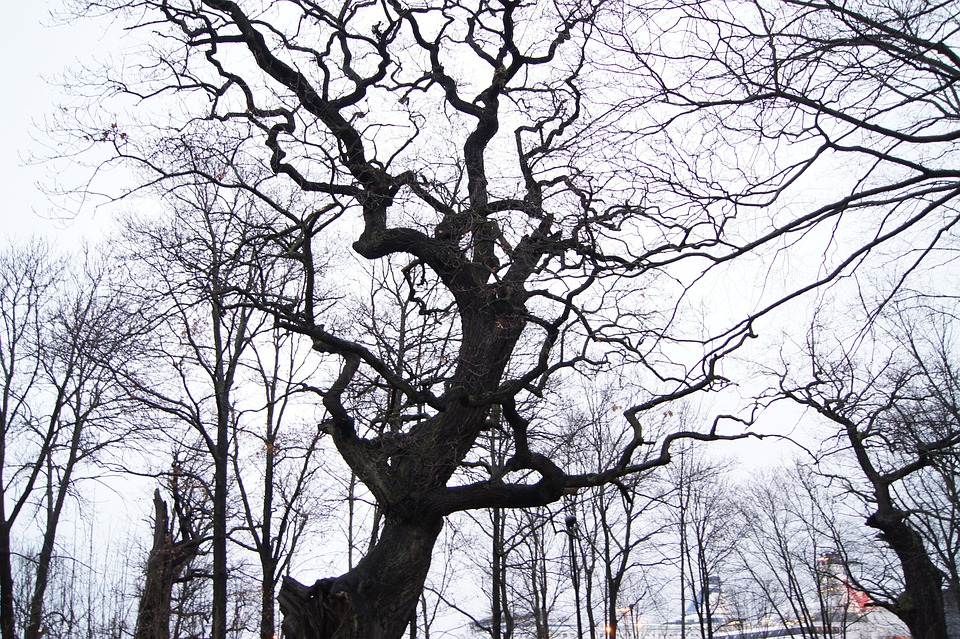 Stockholm, Winter, Tree, Sweden, Scary, Twisted