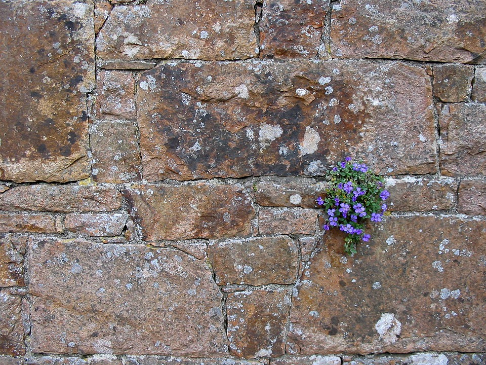 Flower, Flowers, Blue, Stone, Wall, Stones, Background