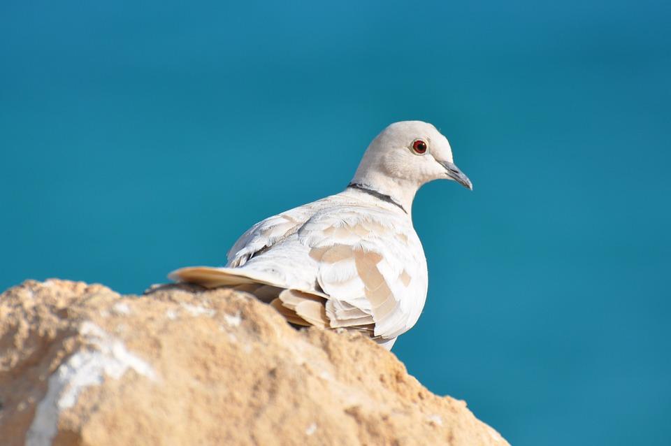 Cliff, Sea, Stone, Dove