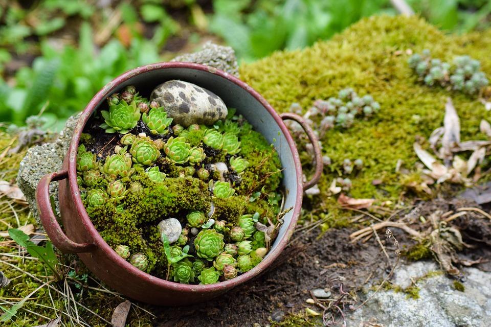 Succulents, Nature, Stone Garden, Cactus, Rock Garden