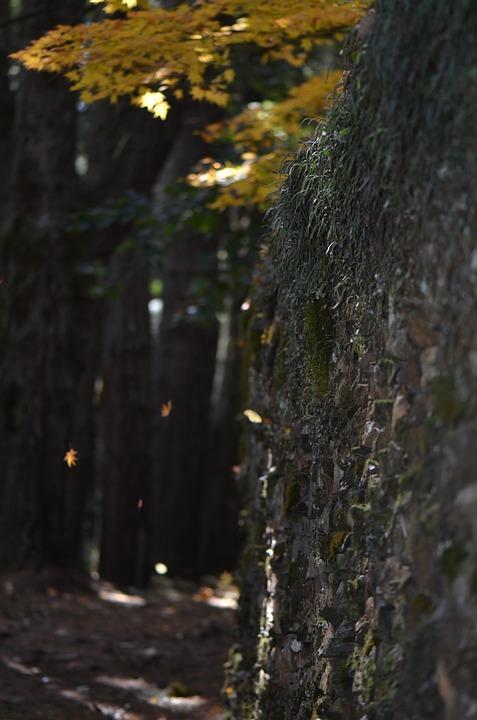 Autumn, Wall, Texture, Landscape, Stone, Trees