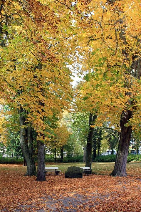 Park, Tree, Autumn, Leaves, Bank, Stone, Rock