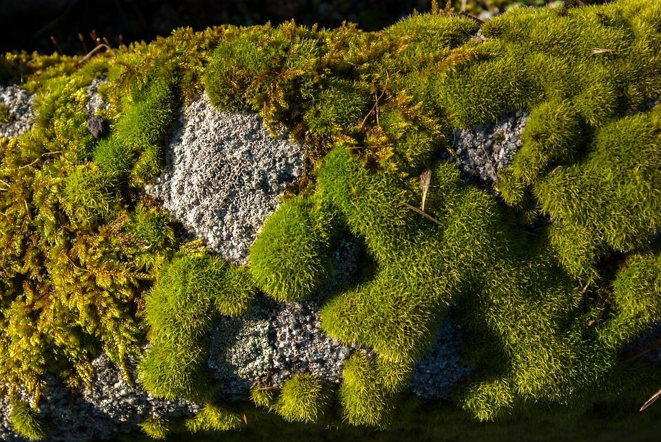 Lichen, Moss, Stone, Nature, Plant, Outdoor