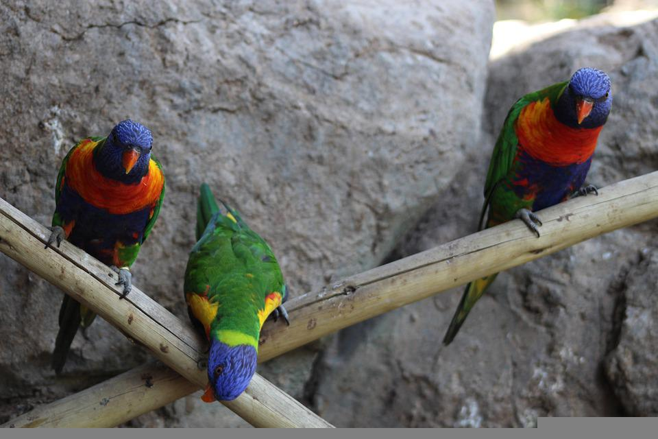 Parrot, Stone, Birds