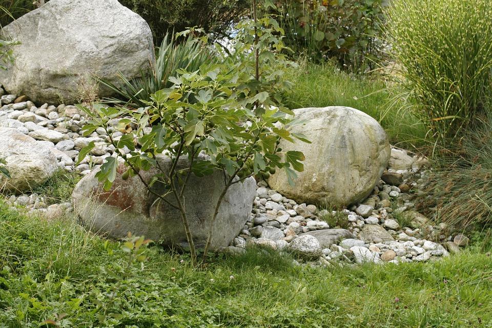 Tree, Stone, Meadow
