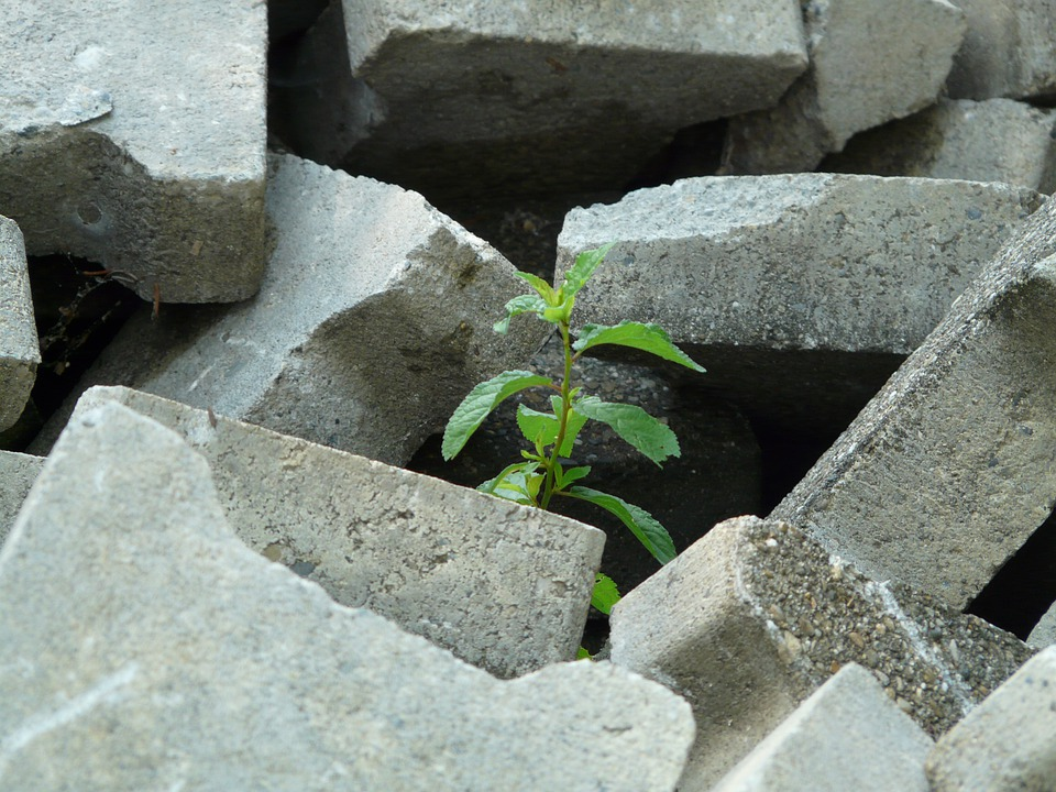Tree, Plant, Grow, Growth, Chance, Ray Of Hope, Stone