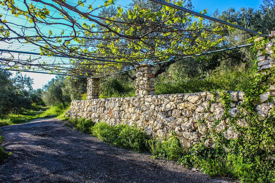 Vine, Rocky, Wall, Plant, Stone, Green, Nature, Texture