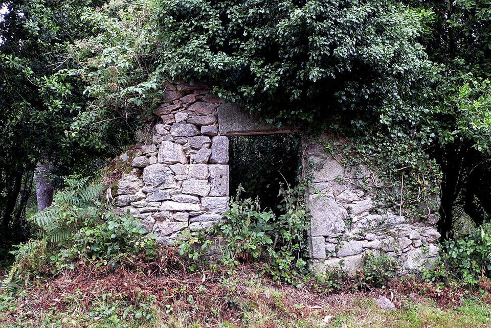 Forest, Ruins, Trees, Plants, Stone Wall, Nature
