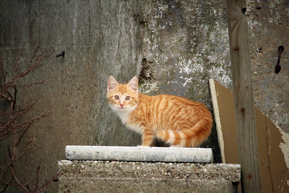 Cat, Cat Baby, Stone, Stone Wall, Wall, Old, Kitten