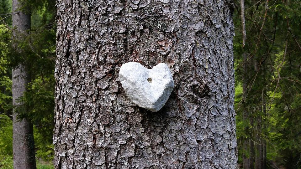Stone, Heart, Wood, Tree, Heartshaped, Rock, Romance