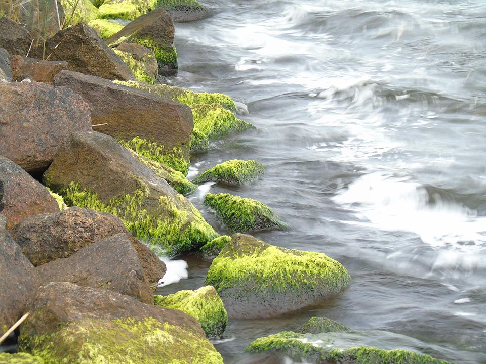 Bank, Stones, Wave, Wind, Seetank, Water, Seaweed