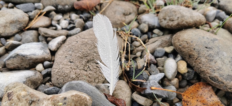 White Feather, Beach, Morgentau, Nature, Autumn, Stones