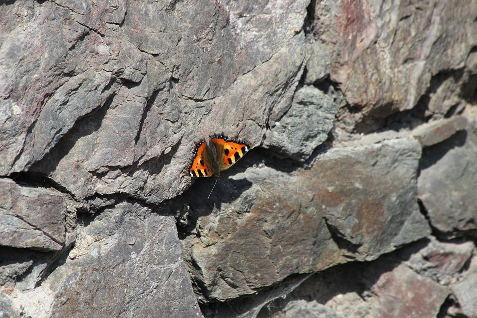Butterfly, Stones, Sun